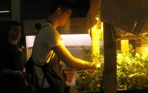 Titan Terrace uses in school herbs