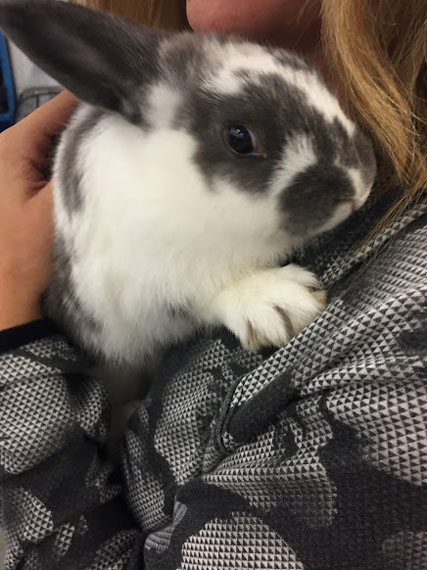 Bunny Therapy at WWT