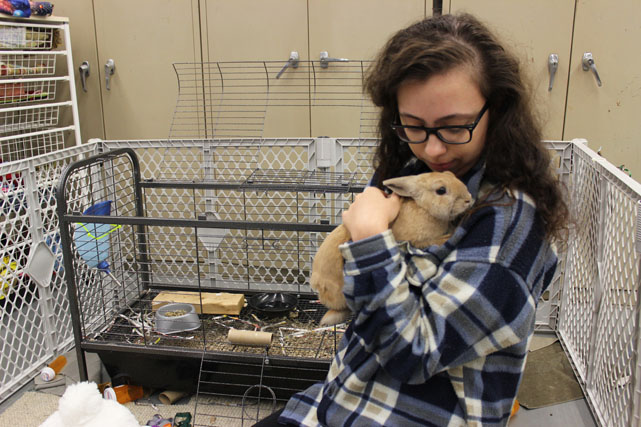 NEW BUNNY PROVIDES EMOTIONAL SUPPORT TO ALL